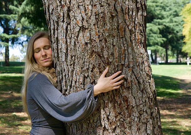 Сила природы: как восстановить здоровье при помощи деревьев